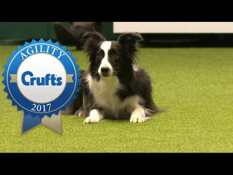 Agility - Kennel Club British Open Jumping Final (Part 1) | Crufts 2017