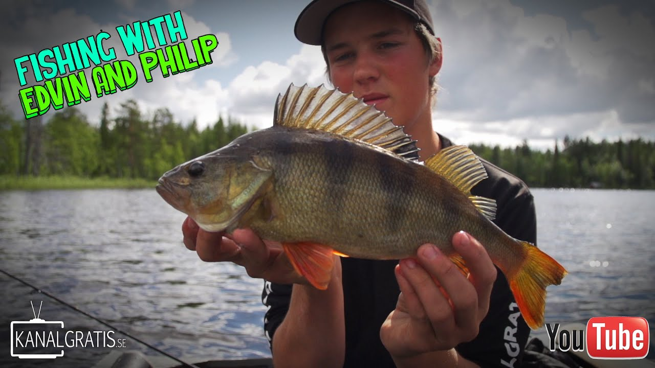Download Perch Up North   Fishing with Edvin and Philip (English Subtitles)