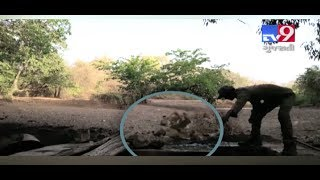 Forest official helps quench lions' thirst in Gir - Tv9