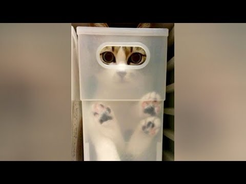 ANIMALS that will MAKE YOU LAUGH MORE THAN ANYTHING ELSE! - Super FUNNY ANIMAL videos streaming vf