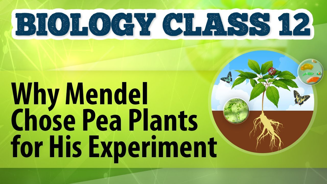 3 reasons why gregor mendel chose the pea plant