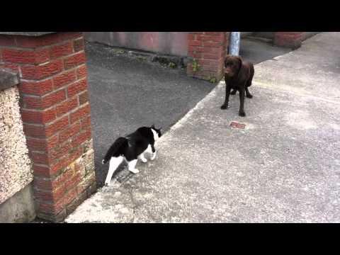 cat sensor water spray