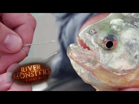 Thumbnail: Can a Piranha Bite Through Steel? - River Monsters