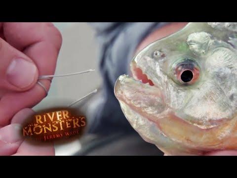 This Piranha Can Bite Through Steel! | PIRANHA | River Monsters