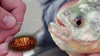 Can a Piranha Bite Through Steel? - River Monsters thumbnail