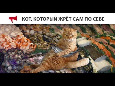 Кот в аэропорте владивостока