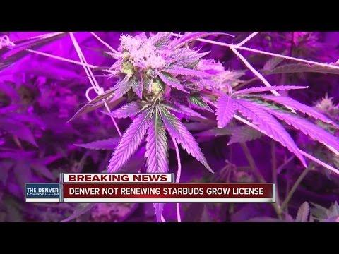 Denver Not Renewing Starbuds Grow License