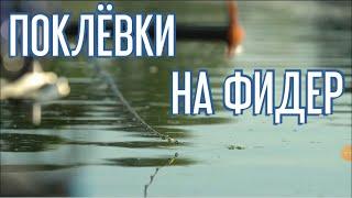 Поклевки на фидер Красивые кадры с рыбалки
