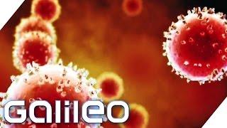 Virenfallen im Alltag | Galileo