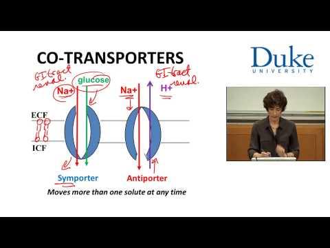 TRANSPORTERS, CHANNELS & PUMPS @ Duke university by Emma Jakoi Ph.D.