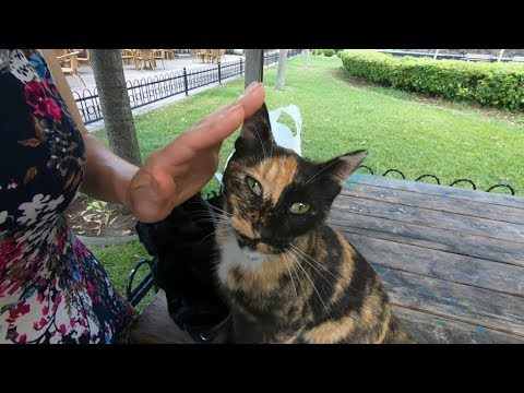 Tortoiseshell Cat Purring, When I Pet Her