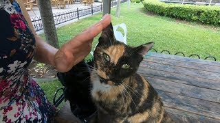 Tortoiseshell cat purring, when i pet her
