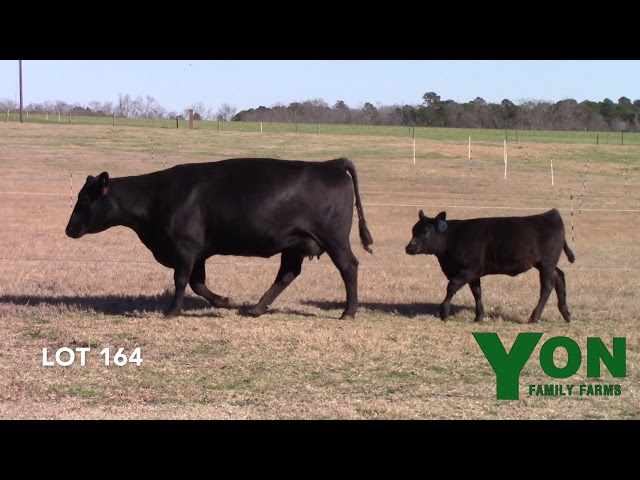 Yon Family Farms Lot 164
