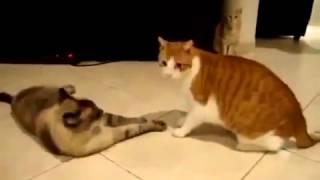 Приколы говорящие коты, они реально говорят