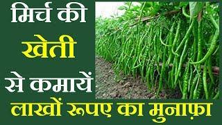 मिर्च की खेती कैसे करें अधिक मुनाफे के लिए || Green Chili Farming Technology -Mirch ki kheti kaise
