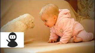Babies and Dogs 🐶👶 Babies and Dogs Funny Moments (Part 1) [Epic Laughs] new