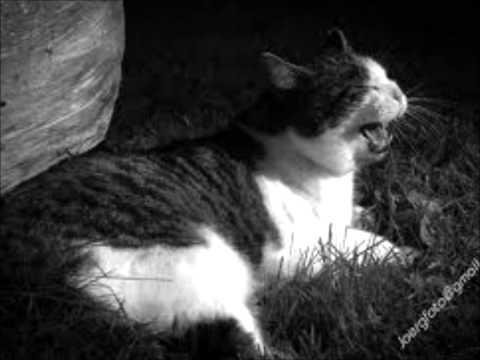Serenades-Come home