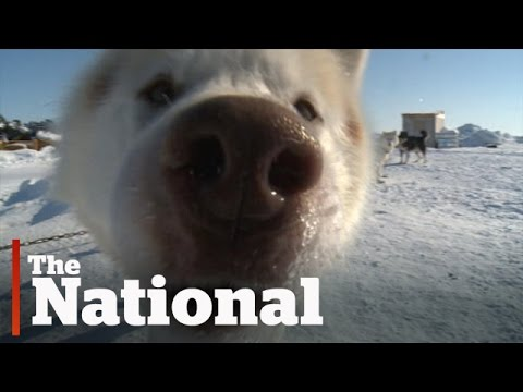 The Arctic | Why Some Love Living There