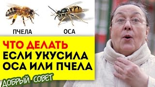 Что делать если укусила оса или пчела || добрые советы