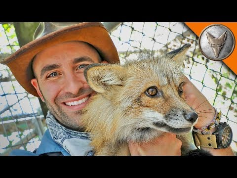 Friending a Fox!