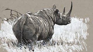 Drawing - Inktober Black Rhino Drawing