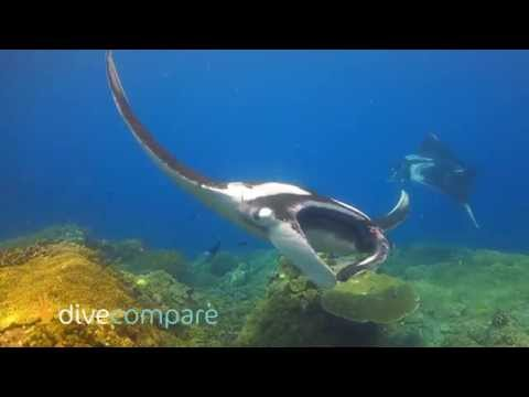 Scuba Diving Raja Ampat - Marine Life | Dive Compare