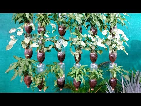 How to make a hanging disposable bottle garden youtube for How to build a bottle wall