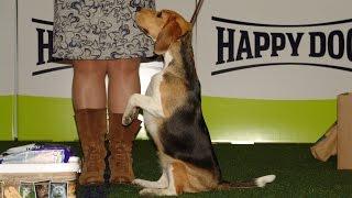 BEST IN SHOW - 3 группа пород (маленькие собаки). Чемпионат Германии. Выставка «Планета собак 2017»
