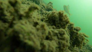 Первая ЗИМНЯЯ рыбалка 2019 2020 Подводная съемка Ловля ЩУК на Жерлицы Бешеный клев 4К