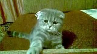 Кто дразнит котэ, тот покойник