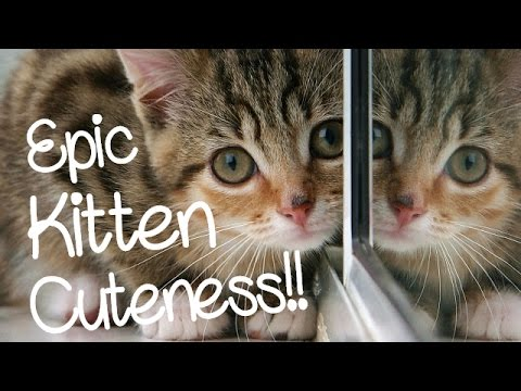Epic Kitten Cuteness!!  Tons of Super-Cute Kitties, Kittens and Cats!  By Kid Vids!