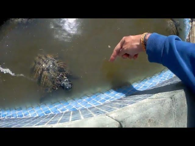 Me muerde una tortuga y muestro las caimán!!😨🐢