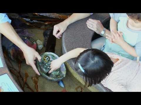 Monterey Bay Aquarium: A Conversation With Julie Packard | Pottery Barn Kids