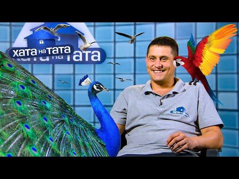 Николай Апостол – птица высокого полета – Хата на тата 10 сезон. Выпуск 2 от 09.10.2021
