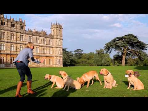 The Puppies of Highclere Castle - First Birthday