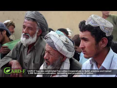 CARD-F's Development of Cotton Value Chain in Balkh Province, Afghanistan