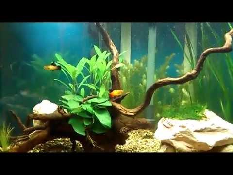 tropical set up aquarium aquaone ufo 550 100l fish tank. Black Bedroom Furniture Sets. Home Design Ideas