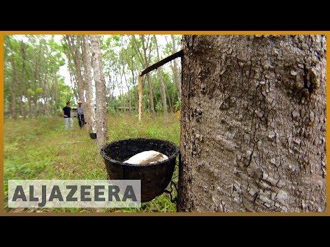 🇹🇭 Thailand offers rubber farmers subsidy amid falling latex prices | Al Jazeera English
