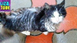 Грязнуля Мистер Кэт 😼 Что случилось с нашим котом 💦 Купаем котика funny cats милые животные