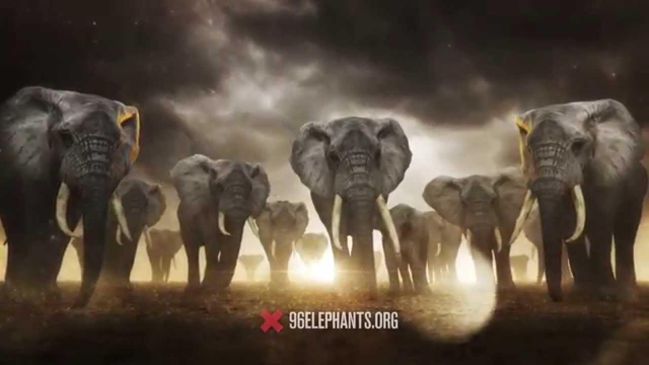 96 elephants take a