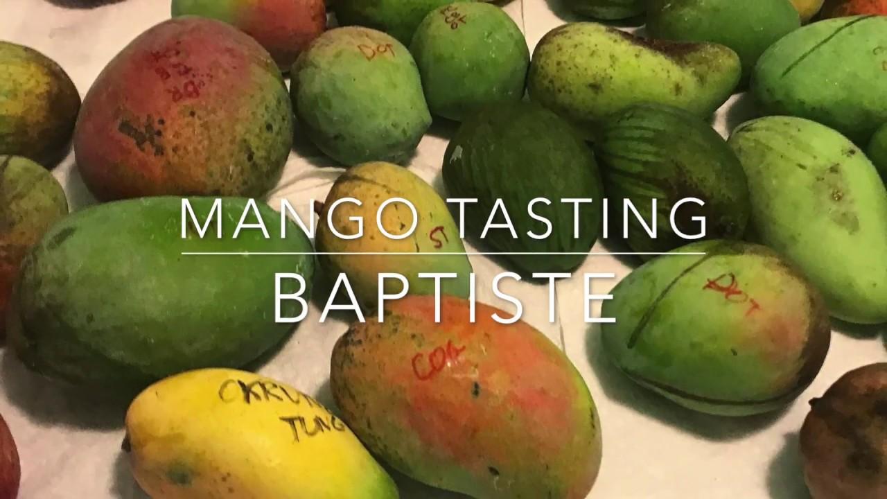 Florida Mango Tasting Baptiste Mango Haitian Youtube