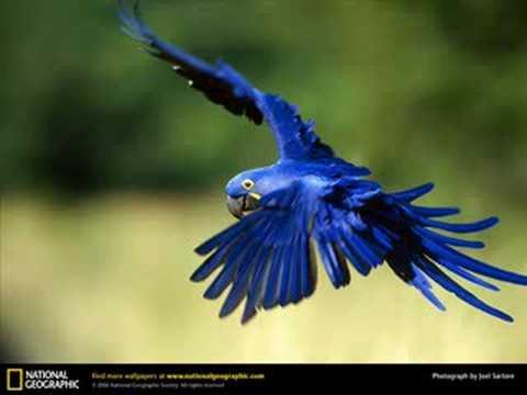 Exotic Birds For Sale >> Animais mais lindo - YouTube