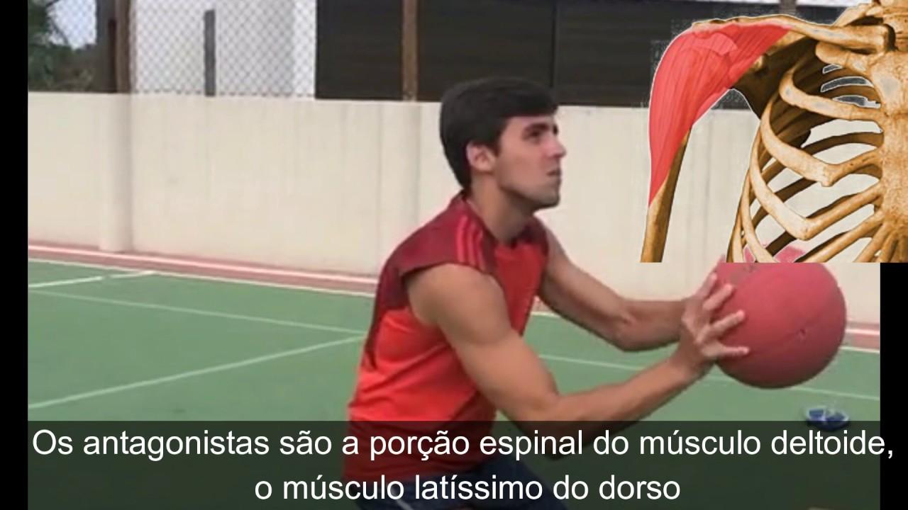 Anatomia - Músculos agonistas, antagonistas, sinergistas e fixadores ...