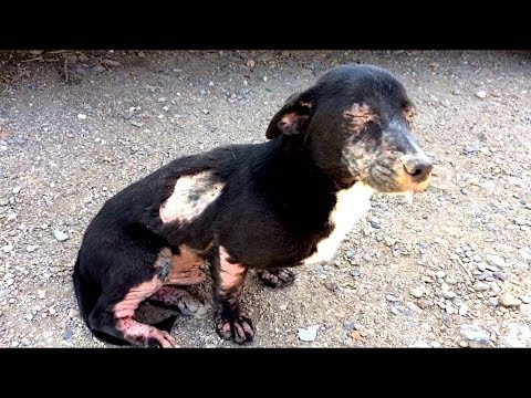 Homeless Sick Dog Rescued. Amazing Transformation! Please share!