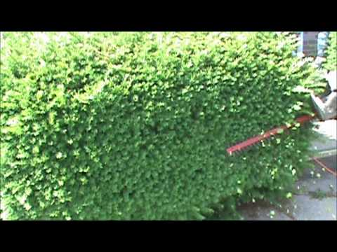 My DIY Trimming Hedges and Shrubs