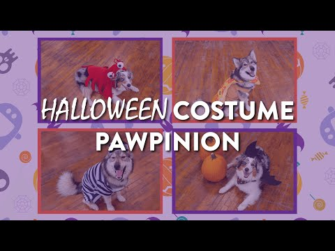 Pawpinions - Halloween Costumes!