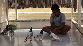 Dubai 8_Pigeons Landing 1:03pm 1:03pm 2:35pm 3:35pm 4:13pm 5:00pm 5:24pm 5:56pm In Dubai Tournament