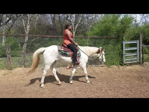 Beginner Riding lessons Western pleasure sitting trot