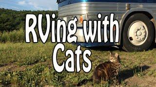 RVing with Cats: Campgrounds, Litterboxes, Leash Training, Vet Care & Pet Monitoring