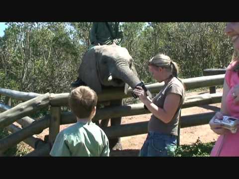Buccaneers Backpackers & Lodge